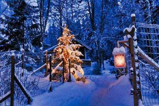 Winter, Lantern, Fence, Christmas Tree