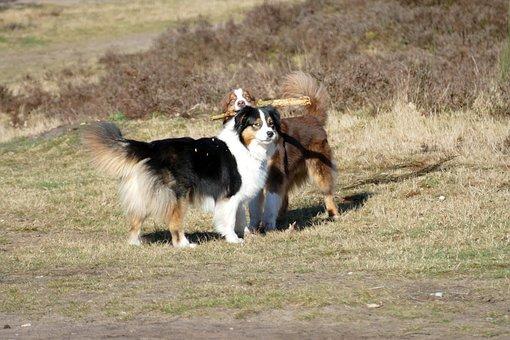 Dogs, Dog, Pets, Mammal, Play, Branch, Fun, Nature