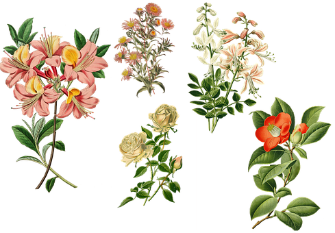 Vintage, Garden Plants, Flowers, Garden Flowers, Floral
