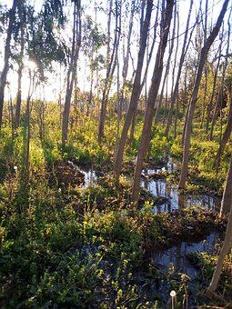 White Poplar, Plants, Garden, Water, Morning, Sunrays