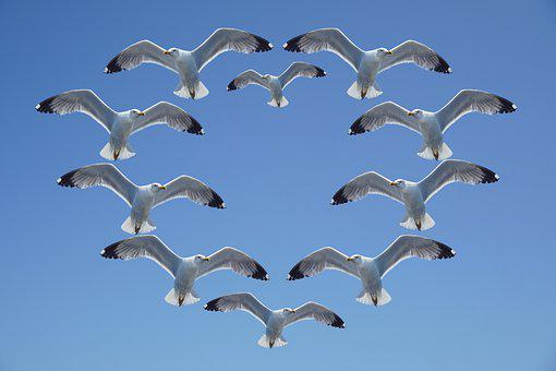 Seagull, Heart, Background, Sky, Wing, Feather, Gulls