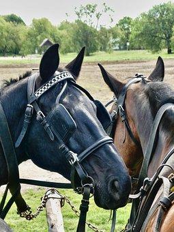 Horses, Bridles, Blinkers, Manes, Heads, Horse Heads