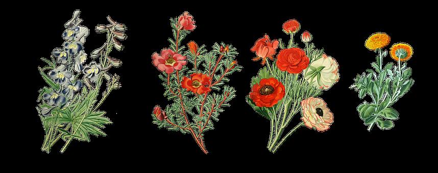 Flowers, Garden Plants, Vintage, Larkspur, Marigold