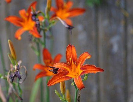 Flower, Spring, Mood, Nature, Bloom, Hemerocallis