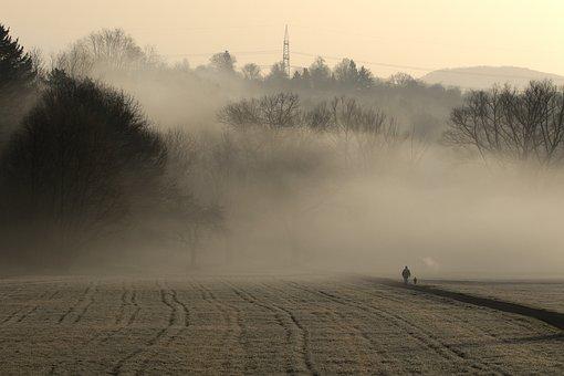 Dawn, Morning, Dog, Nature, Pedestrian, Sunrise, Fog