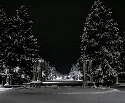 Winter, Snow, Night, Park, Cold, Light, Lamps