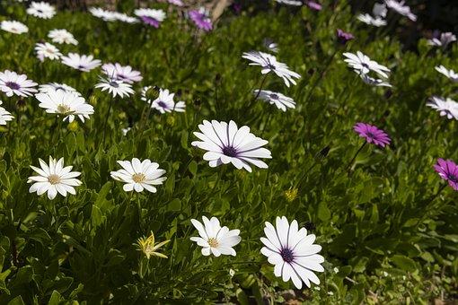 Flower, Spring, Plant, Nature, Season, Grass, Garden