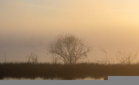 Riverbank, Fog, Sunrise, River, Silhouette, Sunlight
