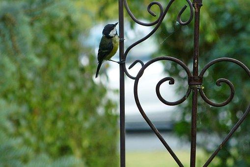 Bird, Tit, Garden Bridle, Heart, Songbird, Cute