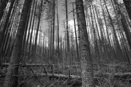 Trees, Forest, Bare Trees, Woods, Tree Trunks, Trunks