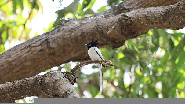 Bird, Branch, White, Colorful, Nature, Animal, Wildlife