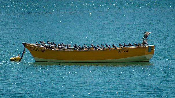 Boat, Birds, Sailboat, Sea, Calm, Lake, Landscape