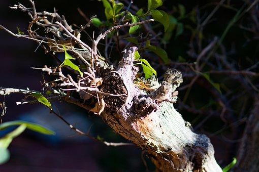 Tree, Leaves, Dry