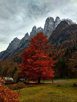 Trees, Mountains, Fall, Beech, Autumn, Field, Meadow
