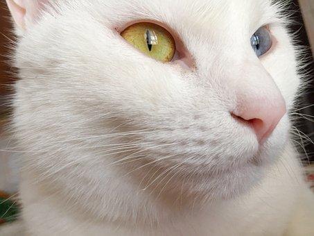 Cat, Eyes, Animal, Feline, Kitten, Cute, Night