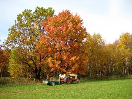 Fall Tree, Trees, Birch, Tractor, Field, Woods, Trailer