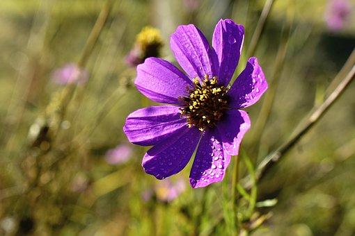 Flower, Purple, Dewdrops, Water Droplets