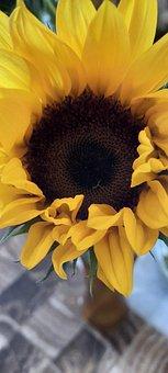 Sunflower, Flower, Yellow, Nature, Summer, Petals