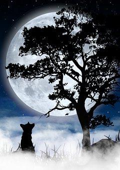 Night, Moon, Fox, Silhouette, Fog, Monkey, Full Moon