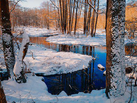 Trees, Snow, River, Stream, Brook, Forest, Woods