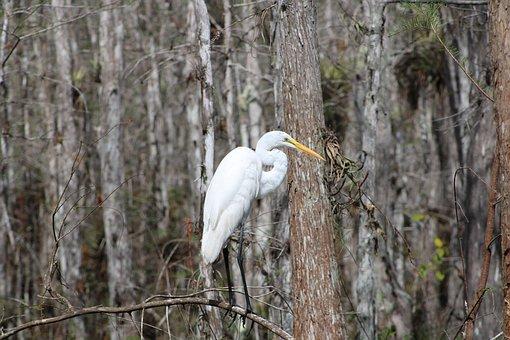 Heron, Nature, Birds, Forest, Everglades, Landscape