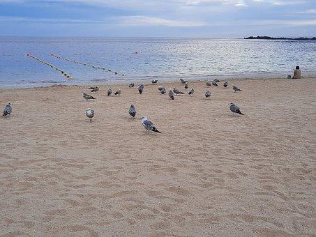 Paloma, Mar, Oceano, Beach, Water, Nature, Blue