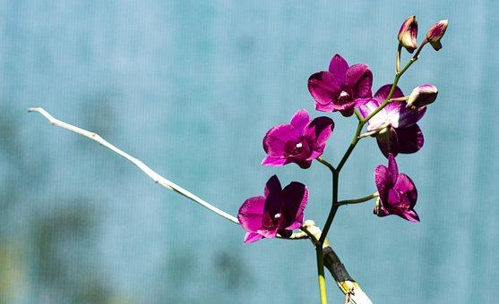 Orchid, Nature, Bloom, Flower, Petal, Violet, Purple