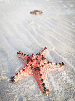 Sand, Starfish, Beach, Nature, Summer, Shore, Seashore