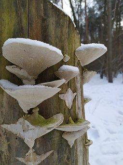 Tree Stump, Mushrooms, Snow, Wild Mushrooms, Spore