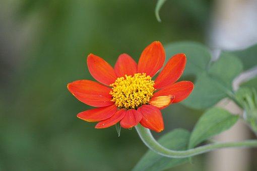 Sunflower, Flower, Blossom, Spring, Sunny