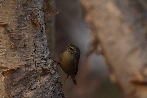 Bird, Small Bird, Tree Trunk, Perched, Perched Bird