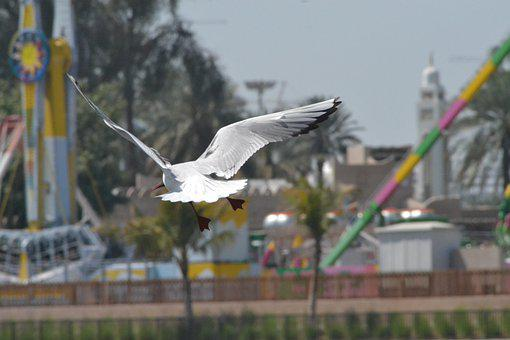 Seagull, Bird, Freedom, Flying, Wings, Animal, Wildlife