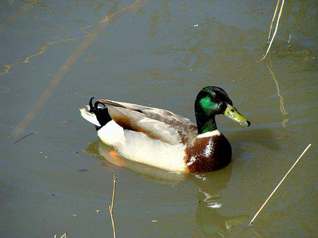 Adult, Animal, Background, Beak, Beautiful, Beauty
