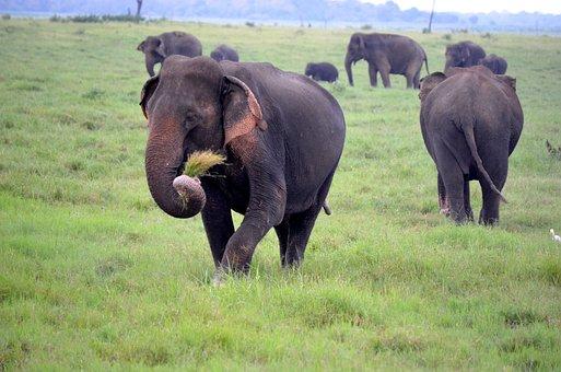 Animal, Animals, Asia, Bush, Close, Conservation