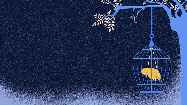 Sad, Bird, Cage, Sadness, Prison, Alone, Captivity