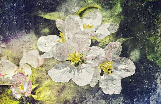 Flowers, Apple Tree, Apple Blossoms, Tree, Bloom