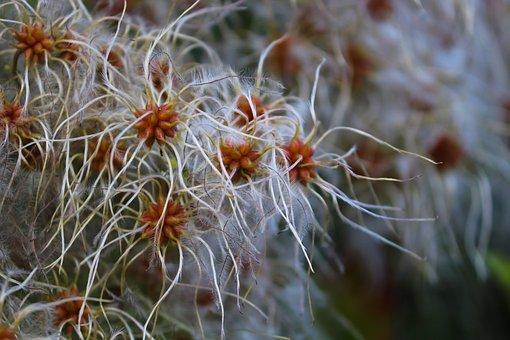 Clematis, Climber Plant, Nature, Close Up, Garden Plant