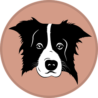 Border Collie, Collie, Dog, Silhouette
