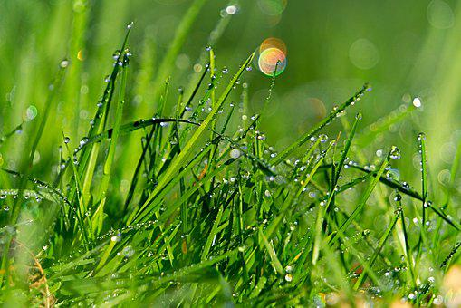 Dew, Grass, Wet, Nature, Green, Bokeh, Costs, Plants