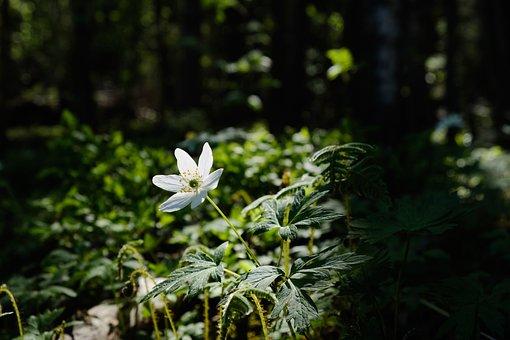 Flower, Plant, Forest, White Flower, Leaves, Bloom