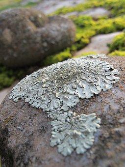 Lichen, Pierre, Foam