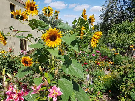 Flowers, Garden, Diversity, Summer, Sunflower, Roses