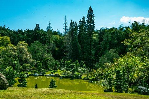 Trees, Grass, Lake, Park, Garden, Path, Nature, Green