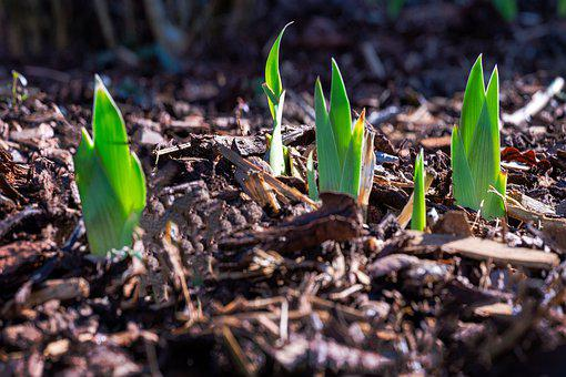Spring, Shoots, Nature, Green, Plant, Hope, Seed