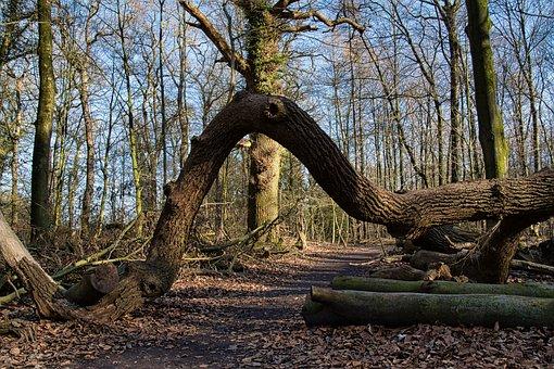 Log, Bent, Fell Down, Jungle, Hasbreak, Nature, Forest