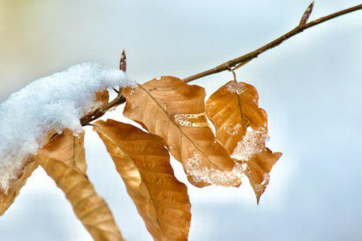 Leaves, Winter, Frost, Tree, Nature, Cold, Ice, Frozen
