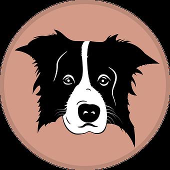 Border Collie, Collie, Dog, Silhouette, Icon, Emblem