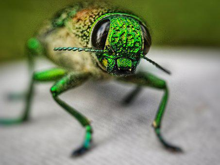 Insects, Kumbag, Photography, Nature