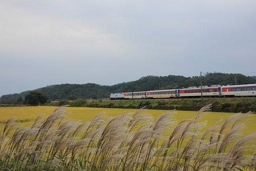 Train, Rice Field, Silver Grass, Korea, Railroad