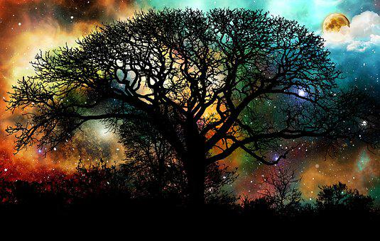 Tree, Sunset, Moon, Forest, Nature, Night, Sky, Evening